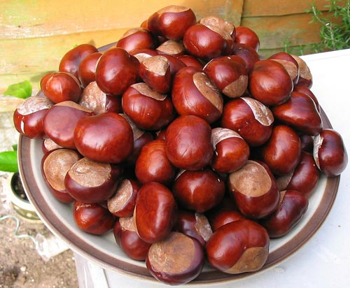 Bowl of Conkers